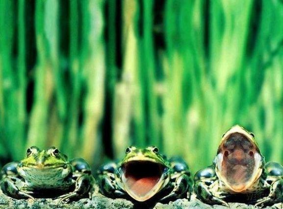 lyagushki foto1 thumb лягушки фотом. лягушки фотом.