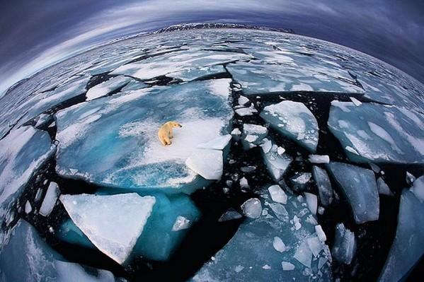 Veolia Environnement'ın düzenlediği 2012 yılının en iyi vahşi yaşam fotoğrafları yarışması sona erdi. İşte ödüle layık görülen çalışmalar..'Dünya ellerimizde' ödülü: Anna Henly