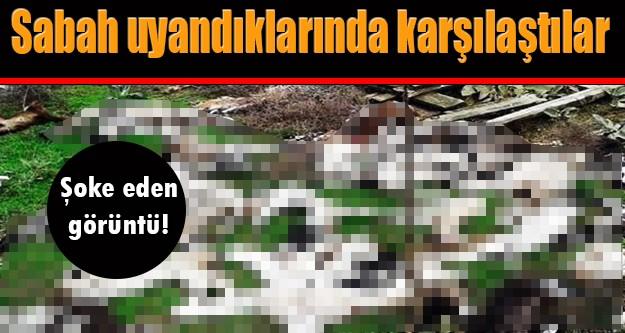 Edirne'nin Süloğlu ilçesine bağlı Sülecik köyünde bir çiftlikte telef olan hayvanlar halkı tedirgin ediyor.