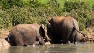 Bebek fili böyle kurtardılar