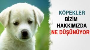 Köpekler Bizim Hakkımızda  Ne Düşünüyor?