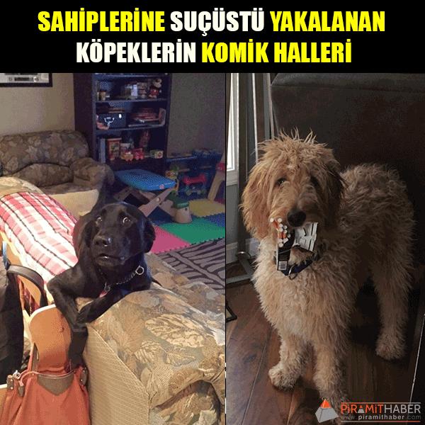 Sahiplerine Yakalanan 16 Köpek