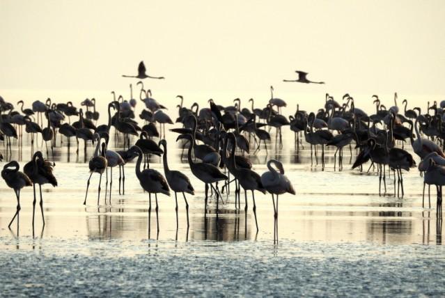 Tuz Gölü, binlerce yetişkin ve yavru flamingonun görsel şölenine ev sahipliği yapıyor.