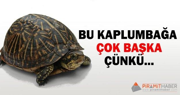 Kırşehir'de bulundu!
