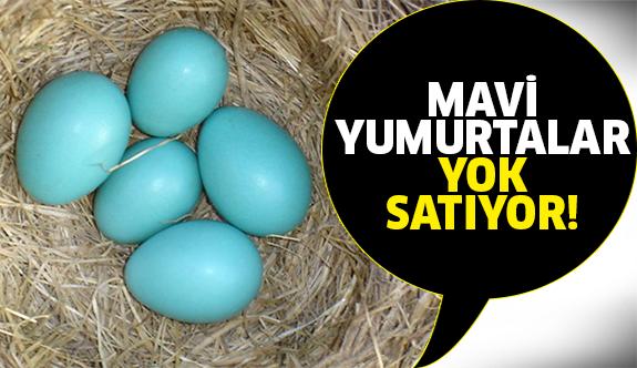 İzmir'de yetişen tavuklar şifa dağıtıyor!