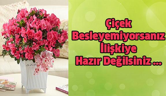 Eğer Çiçek Besleyemiyorsanız İlişkiye  Hazır Değilsiniz...