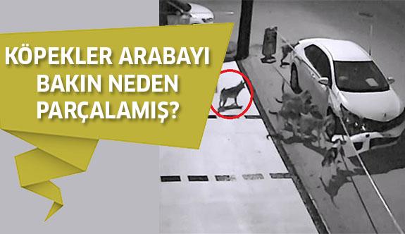 Sakarya'da Araba Parçalayan Köpeklerin Sebebi Belli Oldu!