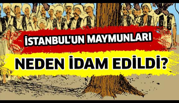''İstanbul'da dalında maymun sallanmayan tek bir ağaç kalmadı''