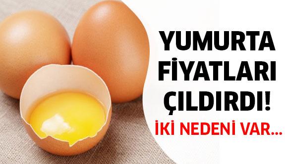 Yumurta fiyatları çıldırdı! Fiyatlar neden yükseldi?