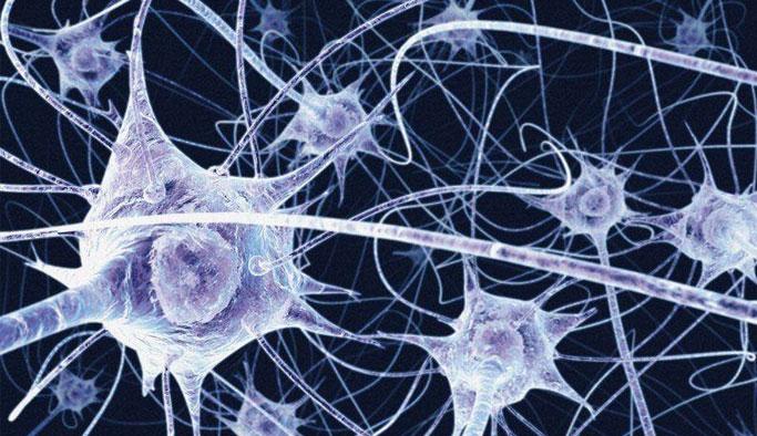 Bağırsak Bakterileri Parkinson İle İlişkili Olabilir Mi ?