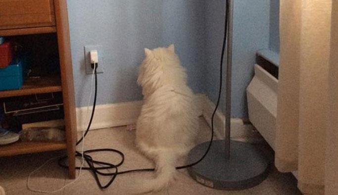 Kediler neden bir noktaya gözlerini diker?
