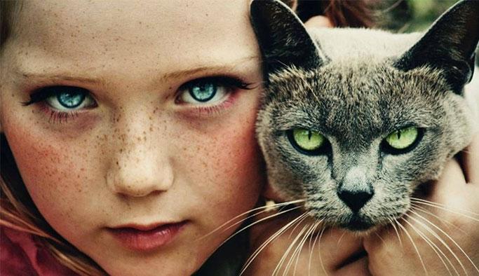 Kediniz Sizi Gerçekten Seviyor mu? İşte Kanıtları...