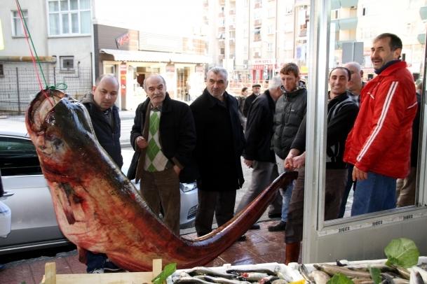 3,5 metrelik yayın balığı şaşırttı