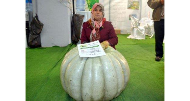 82 kilogramlık bal kabağı yetiştirdi!