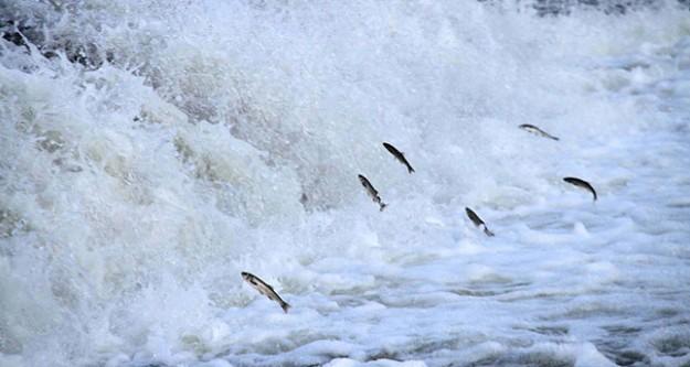 Adeta uçarak göç ediyorlar!