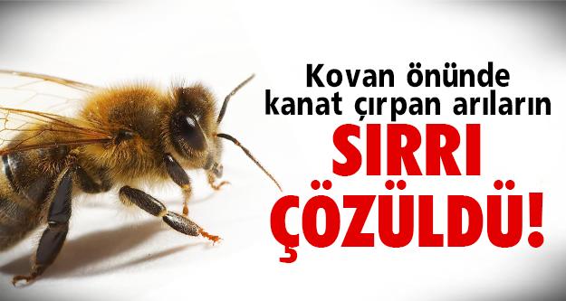 Arılar meğerse..