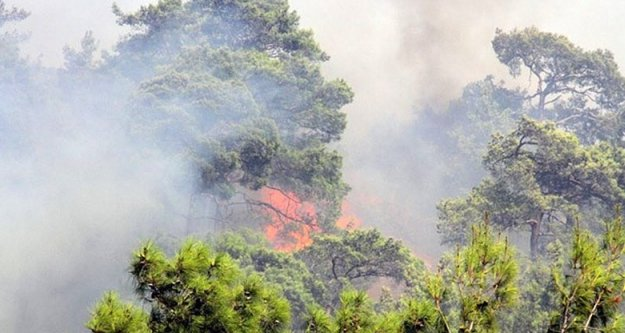 Atatürk Orman Çiftliği'nde yangın paniği!