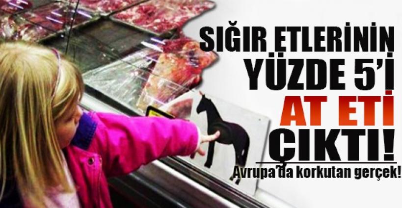 Avrupa'daki 'sığır etleri'nin yüzde 5'i at eti çıktı