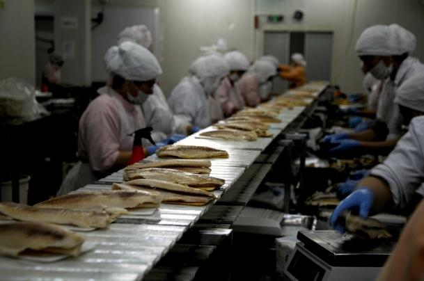 Avrupa'nın balığı Türkiye'den