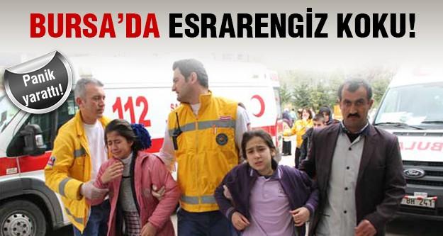 Bursa'da koku panik yarattı!
