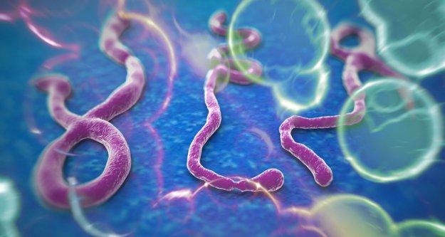 Çin, Ebola virüsünü teşhis eden test geliştirdi