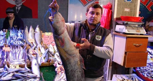 Dev 'yayın balığı' yakalandı