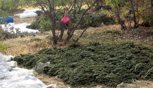 Diyarbakır'da teröre büyük darbe: 15 ton esrar ele geçirildi
