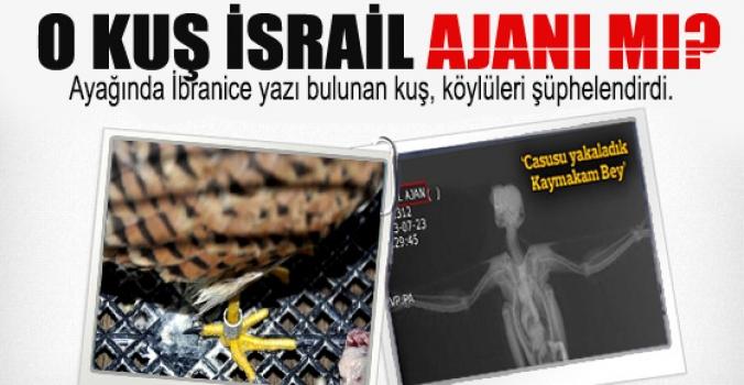 Elazığ'daki kuş İsrail ajanı mı?