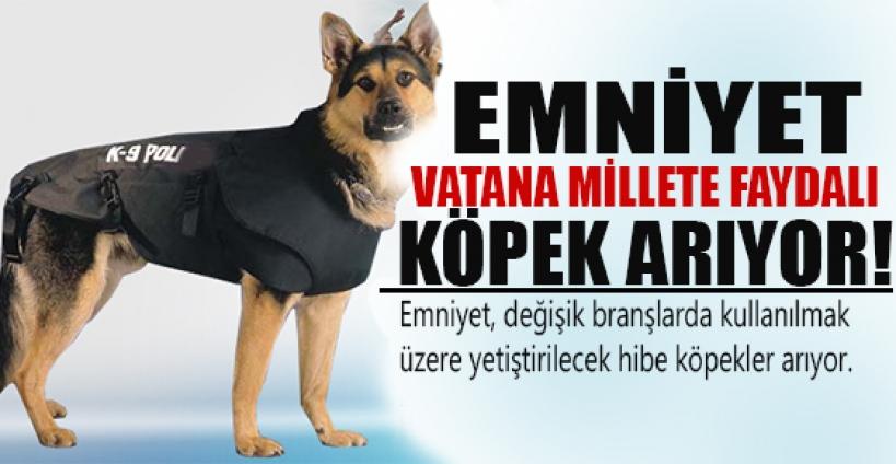 Emniyet, 'vatana, millete faydalı' köpek arıyor