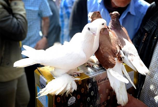 En nadide kuşlar Erbil pazarında