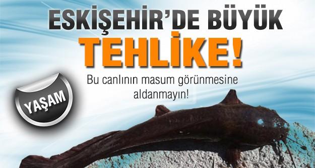 Eskişehir'de istilacı balık tehlikesi