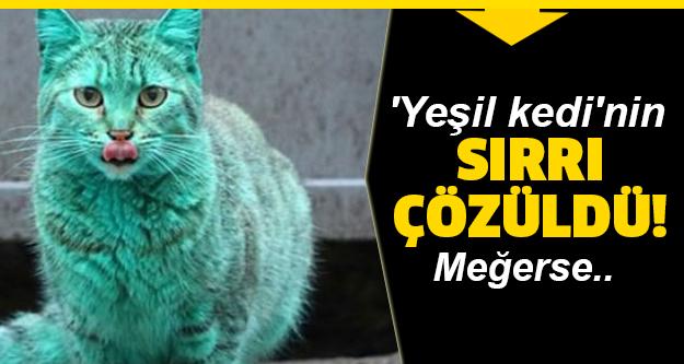 Görülen o yeşil kedinin nedeni buymuş?