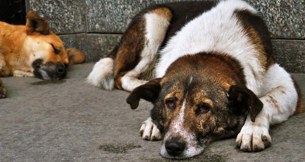Hayvan hakkı ihlallerine büyük ceza!