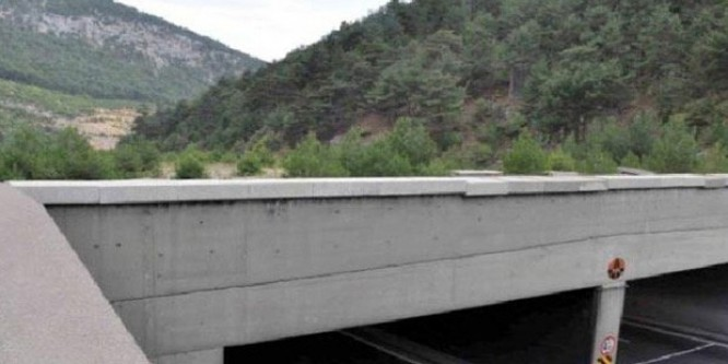 Hayvanlar için köprü yapılacak!