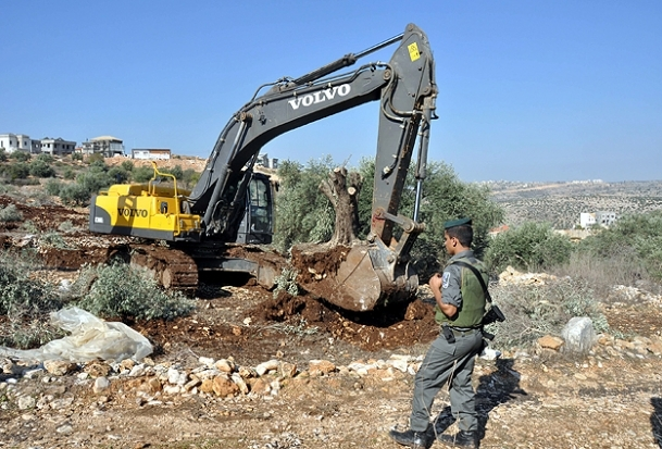 İsrail tarım arazilerini talan etti
