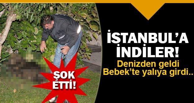 İstanbul'da şok eden olay!
