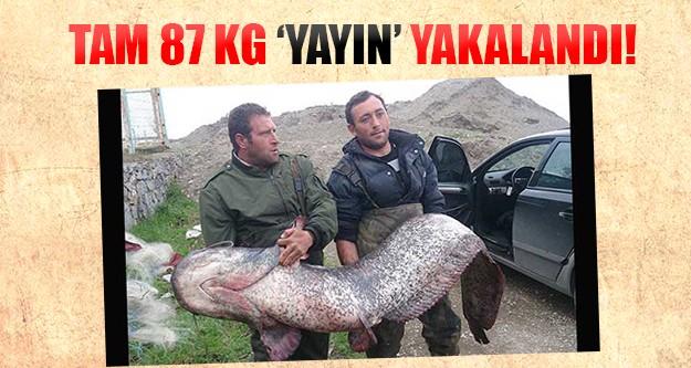 Balıkçıların ağına 87 kilogramlık yayın takıldı
