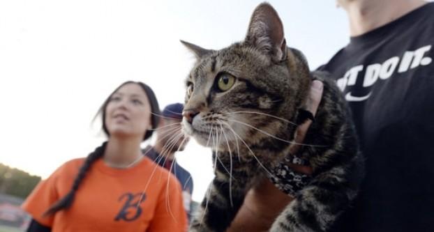 Kahraman kedi ABD'de günün konusu oldu!