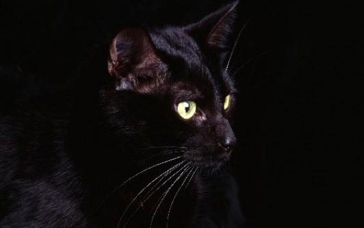 Kara kedi neden uğursuzdur?