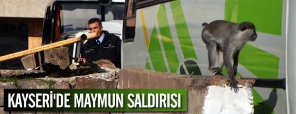 Kayseri'de maymun saldırısı