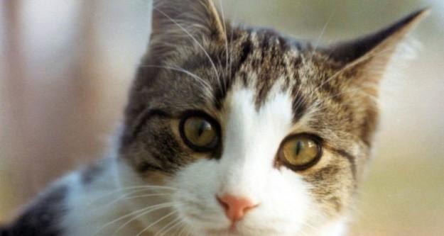 Kedilerin saldırısına uğrayan aile yardım istedi!