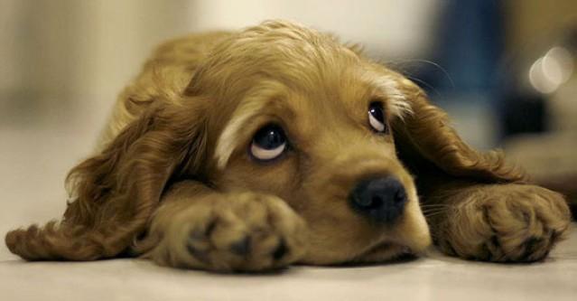 Köpekler de insanlar gibi duygusal..