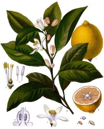 Limon suyu ve sarımsak mucizesi