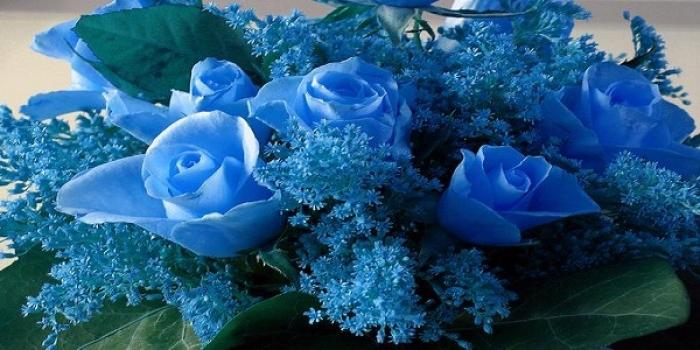 Mavi Gül Efsanesi