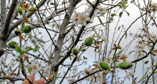 Memlekete bahar geldi..
