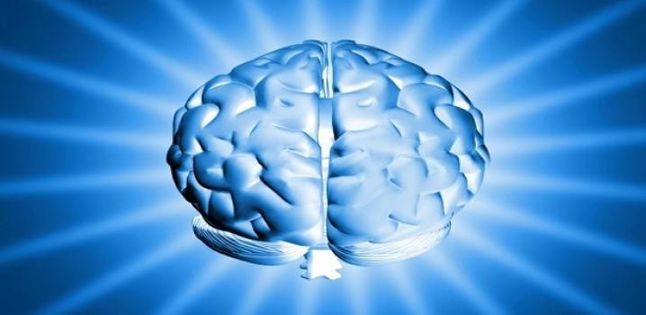 Minyatür İnsan Beyni Üretildi !