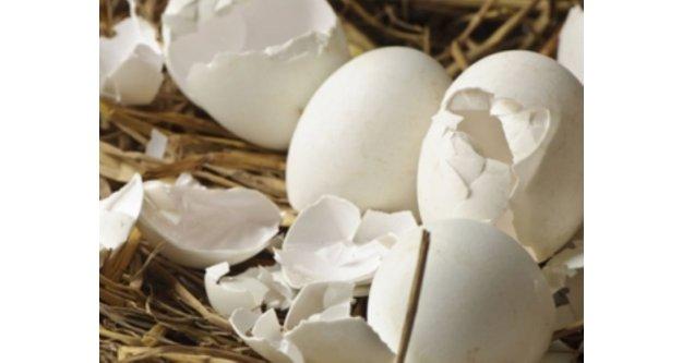 O hastalığın çaresi yumurta kabuğunda!