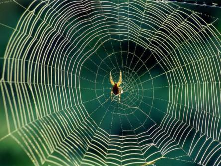Örümcek ağının gizemli sırrı