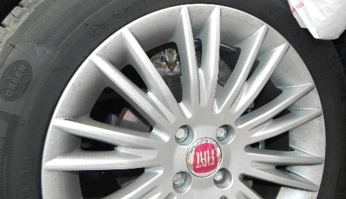 Otomobilin motor kısmına sıkışan yavru kedi araç sahibini uğraştırdı