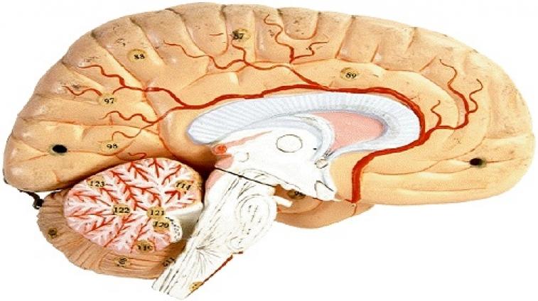 Parkinson Hastalığı nedir - Parkinson Hastalığı kimlerde Görülür